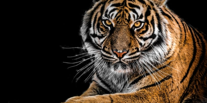 carolina-tiger-rescue-takes-in-big-cats-from-tiger-king-park