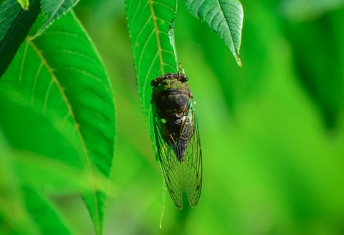 these-cicadas-have-waited-17-years-for-their-close-up