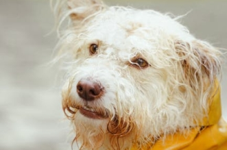 12-dog-raincoats-to-keep-your-pup-dry-and-adorable